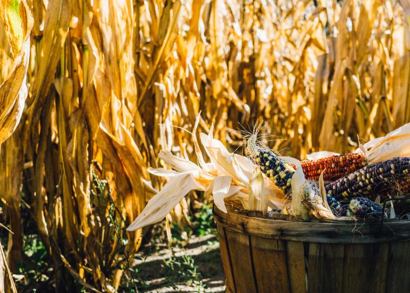 allergia o intolleranza cereali