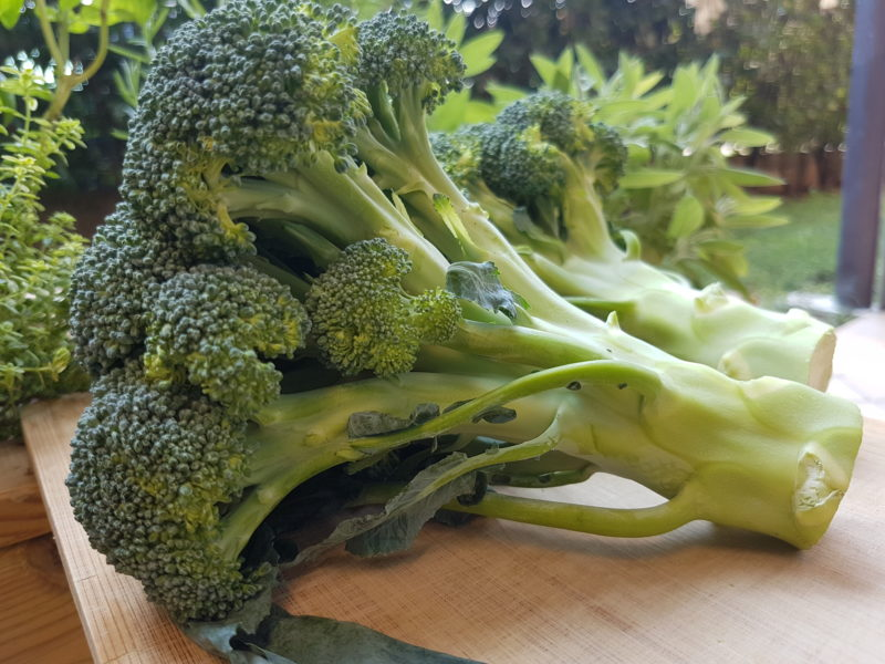 Farfalle integrali con broccoli e granella di nocciole