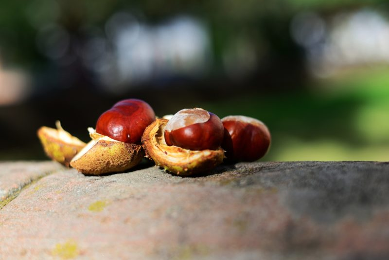 Frutta e verdura di stagione - ottobre